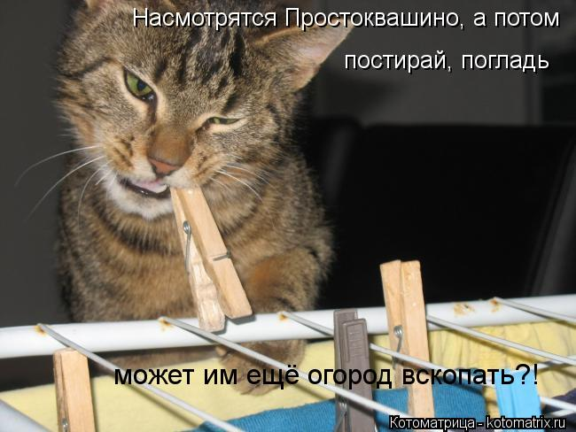 kotomatritsa_hh (650x488, 51Kb)