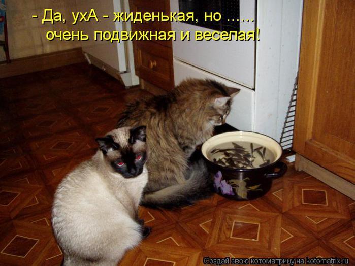 kotomatritsa_zh (700x524, 56Kb)