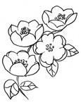 Превью apple-blossom-branch-coloring-page (270x350, 34Kb)