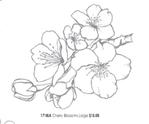 Превью cherry-blossom-pg-55 (262x218, 34Kb)