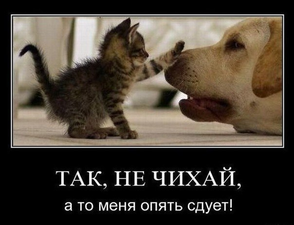 http://img1.liveinternet.ru/images/attach/c/8/100/762/100762507_ErXqL40PqEQ.jpg