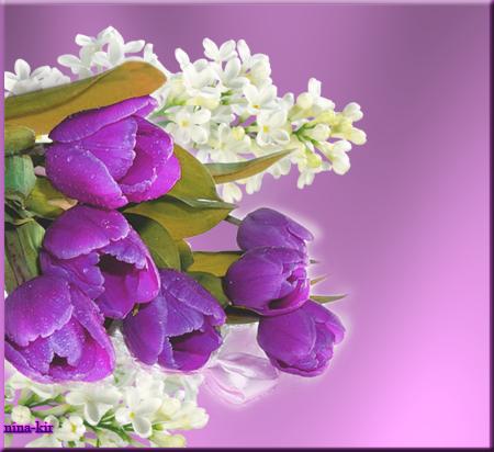 Сиреневые-тюльпаны (450x412, 266Kb)