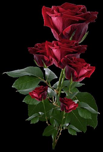 0_8b707_29926876_L тёмно-красные розы (341x500, 194Kb)
