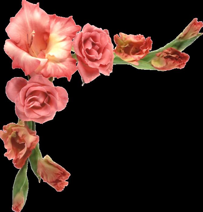 выборе картинки цветов для фотошопа голое