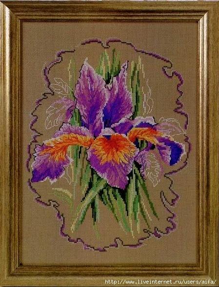 aifa-iris (449x589, 223Kb)