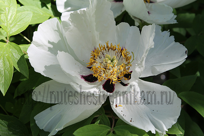 Красивые летние цветы5 (700x467, 154Kb)