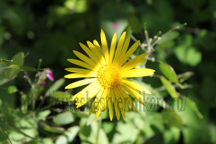 Красивые летние цветы6 (700x467, 125Kb)