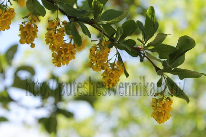 Красивые летние цветы7 (700x467, 152Kb)