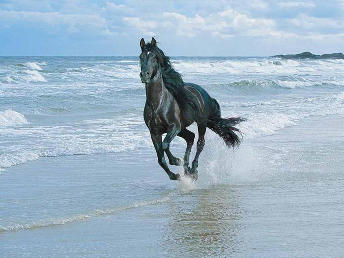 красивые фотографии лошадей (2) (700x525, 59Kb)