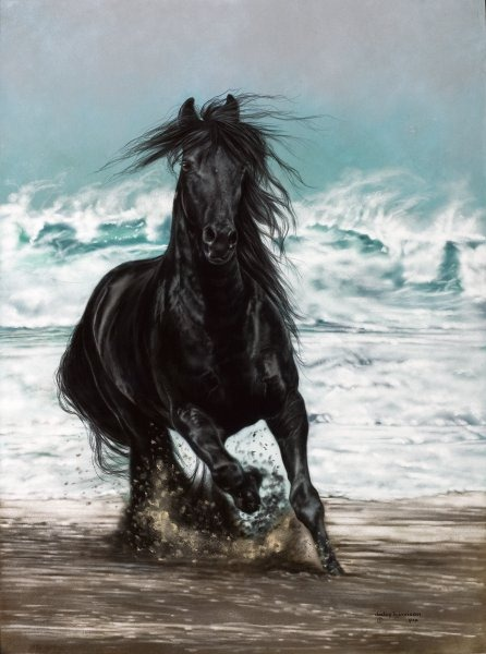 красивые фотографии лошадей (9) (446x600, 66Kb)