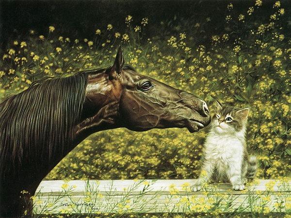 красивые фотографии лошадей (11) (600x450, 122Kb)