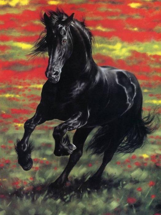 красивые фотографии лошадей (13) (524x700, 93Kb)