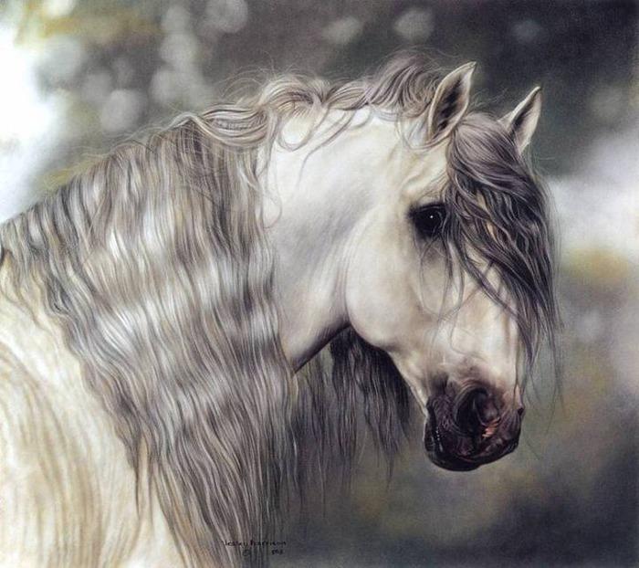 красивые фотографии лошадей (18) (700x622, 114Kb)