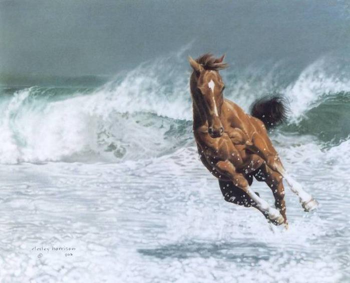 красивые фотографии лошадей (20) (700x566, 81Kb)