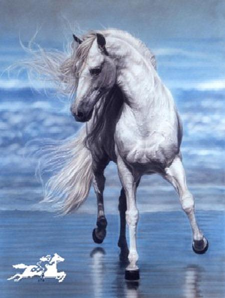 красивые фотографии лошадей (22) (450x596, 62Kb)