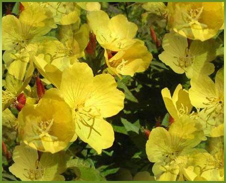 желтые-цв (450x365, 330Kb)
