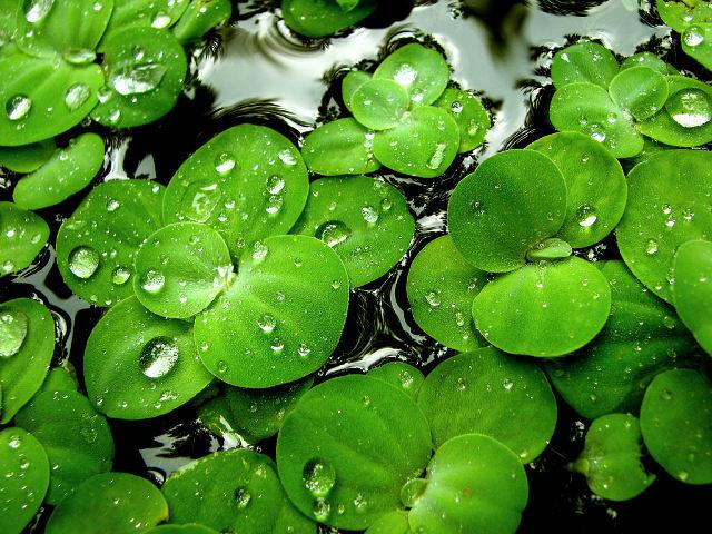 Картинки с зеленым цветом 1
