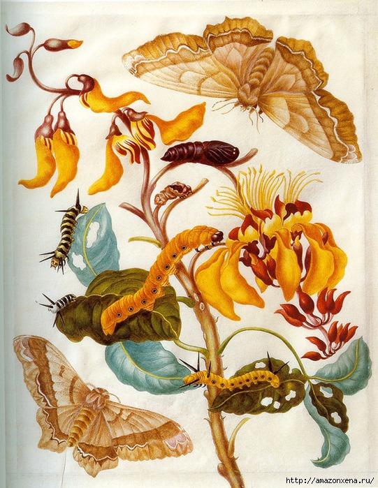 Картинки для декупажа. Бабочки, насекомые и растения (1) (541x700, 317Kb)