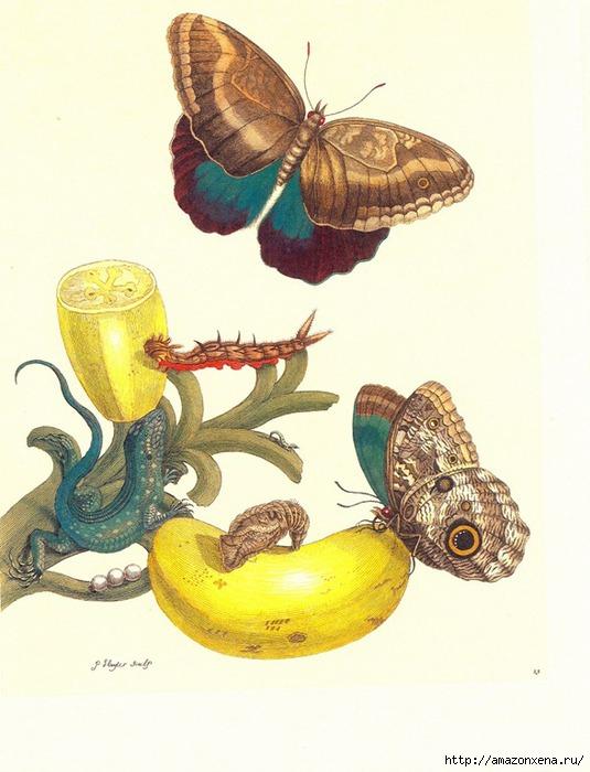 Картинки для декупажа. Бабочки, насекомые и растения (3) (535x700, 202Kb)