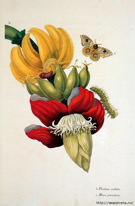 Картинки для декупажа. Бабочки, насекомые и растения (5) (460x700, 194Kb)