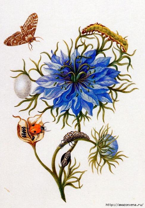 Картинки для декупажа. Бабочки, насекомые и растения (9) (487x700, 239Kb)