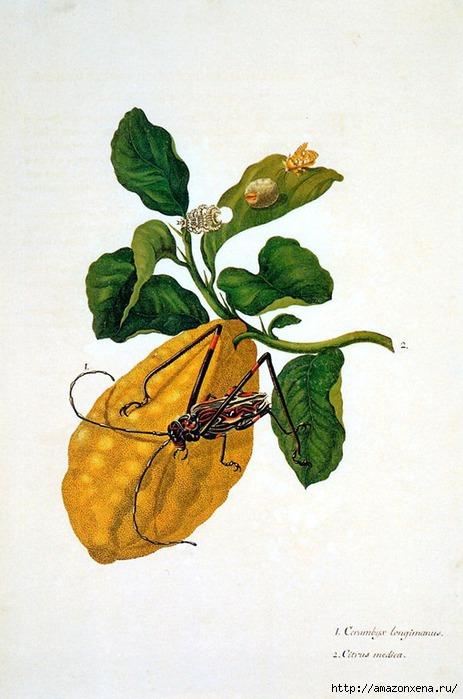 Картинки для декупажа. Бабочки, насекомые и растения (11) (463x700, 190Kb)