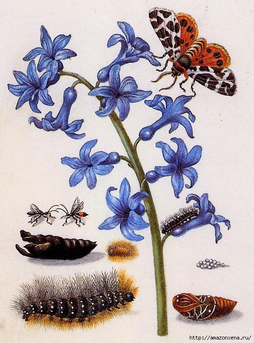 Картинки для декупажа. Бабочки, насекомые и растения (13) (518x700, 293Kb)