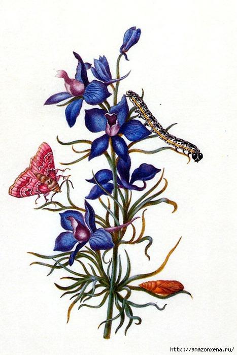 Картинки для декупажа. Бабочки, насекомые и растения (15) (467x700, 197Kb)