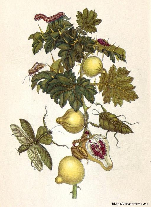 Картинки для декупажа. Бабочки, насекомые и растения (17) (511x700, 257Kb)