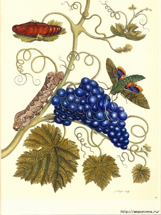Картинки для декупажа. Бабочки, насекомые и растения (19) (525x700, 282Kb)