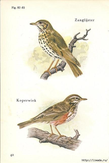 bird 2 (431x640, 136Kb)