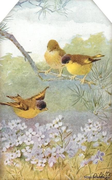 Sweet bird tag 2 ~ lilac-n-lavender (434x700, 250Kb)