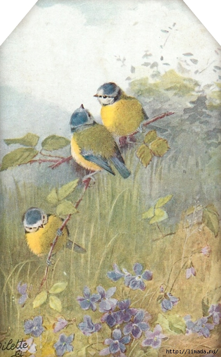 Sweet bird tag 3 ~ lilac-n-lavender (434x700, 241Kb)