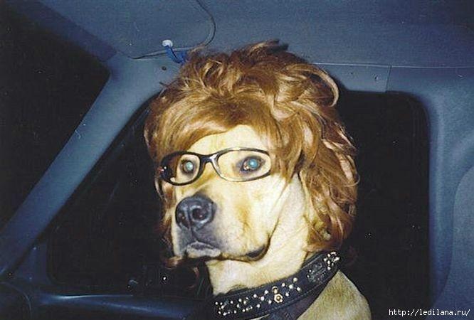 очки для собак (666x450, 123Kb)