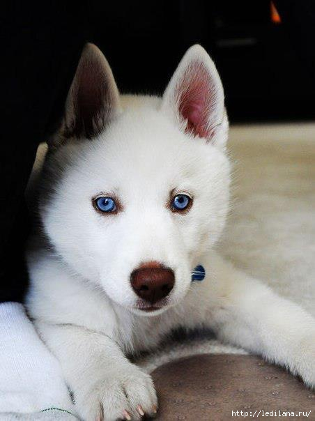 животные собаки (452x604, 90Kb)