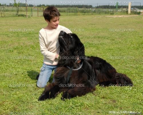 собака (500x403, 121Kb)