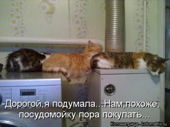 100925909_1366975545_kotomatritsa_v8.jpg