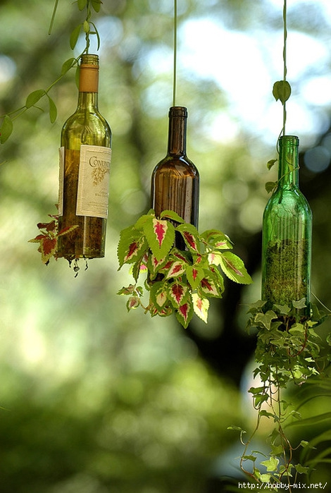 bottle-plant (470x700, 215Kb)