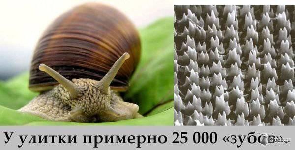 13 (600x305, 46Kb)