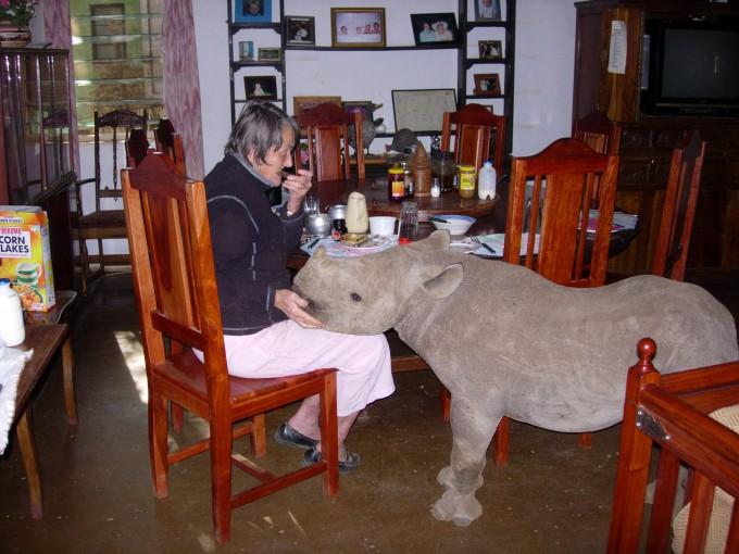 носорог джимми фото 2 (680x510, 99Kb)
