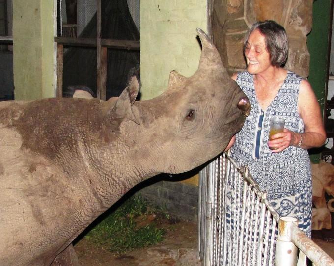 носорог джимми фото 6 (680x542, 134Kb)