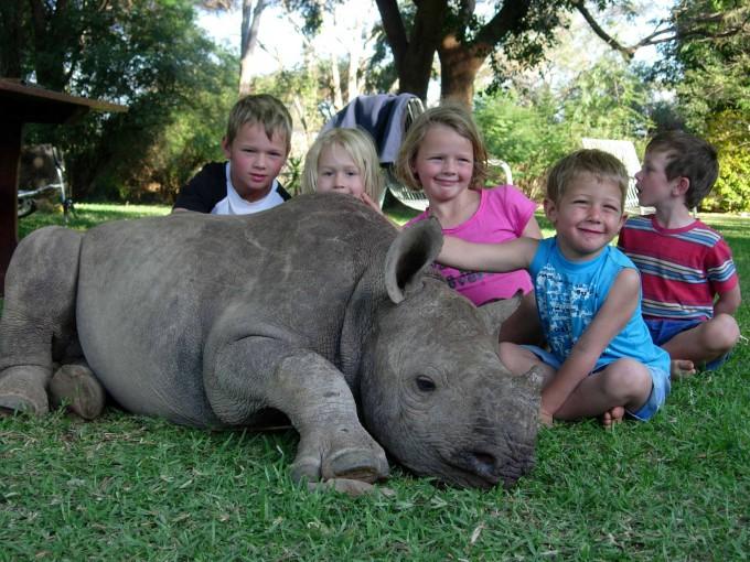 носорог джимми фото 8 (680x510, 135Kb)