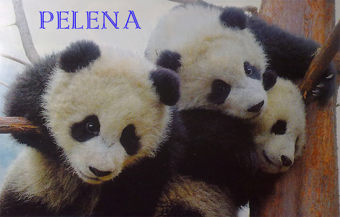 панда/4647507_panda (700x448, 72Kb)