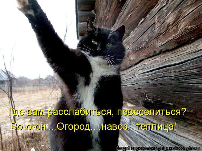 kotomatritsa_A (700x524, 73Kb)