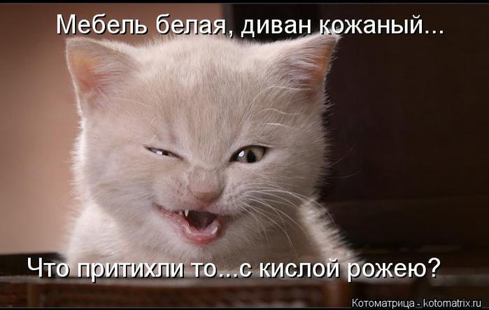 kotomatritsa_A1 (700x443, 38Kb)