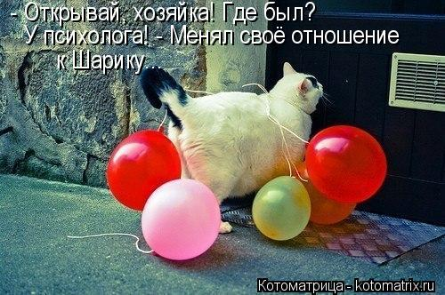 kotomatritsa_Bm (500x332, 50Kb)