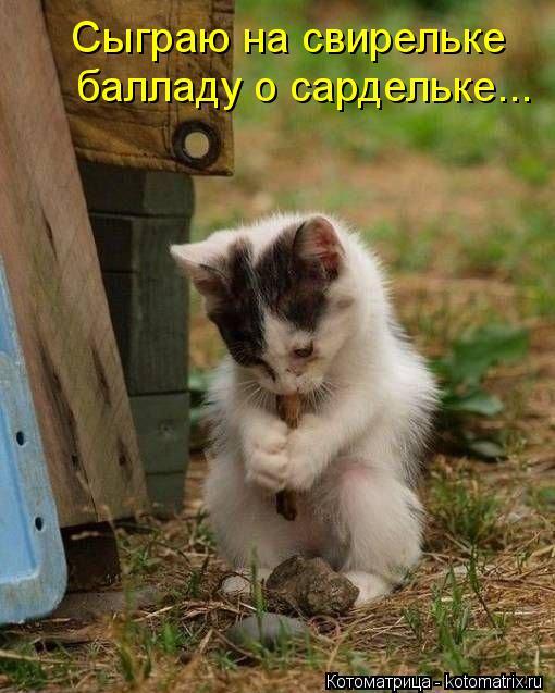 kotomatritsa_kr (510x637, 55Kb)