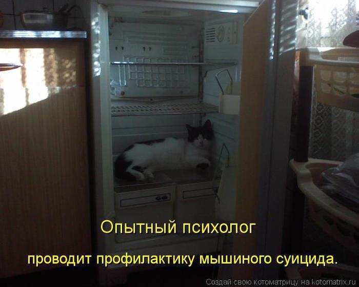 kotomatritsa_VR (700x560, 41Kb)