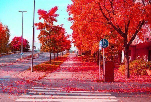 Осень на улице. Финляндия! (604x407, 76Kb)