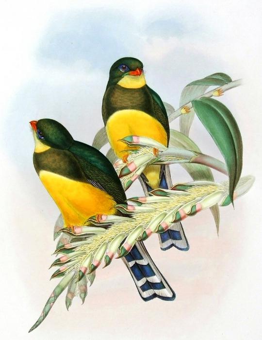 винтажные птицы. картинки для декупажа (16) (540x700, 255Kb)